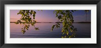 Framed Close-up of leaves of a birch tree, Joutseno, Southern Finland, South Karelia, Finland