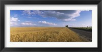 Framed Wheat crop in a field, North Dakota, USA