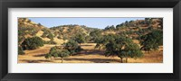 Framed Oak trees on hill, Stanislaus County, California, USA