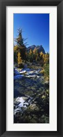 Framed Stream flowing in a forest, Mount Assiniboine Provincial Park, border of Alberta and British Columbia, Canada
