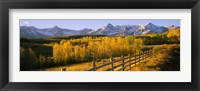 Framed Trees in a field near a wooden fence, Dallas Divide, San Juan Mountains, Colorado