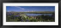 Framed Flowers blooming at the lakeside, Lake Pukaki, Mt Cook, Mt Cook National Park, South Island, New Zealand