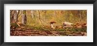 Framed Mushroom on a tree trunk, Baden-Wurttemberg, Germany