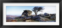 Framed Bare tree near rocks, Haytor Rocks, Dartmoor, Devon, England