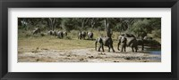 Framed African elephants (Loxodonta africana) in a forest, Hwange National Park, Matabeleland North, Zimbabwe