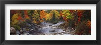Framed Stream with trees in a forest in autumn, Nova Scotia, Canada