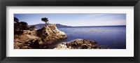 Framed Cypress tree at the coast, The Lone Cypress, 17 mile Drive, Carmel, California