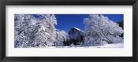 Framed Half Dome, Yosemite National Park, Mariposa County, California