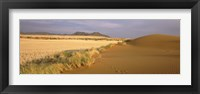 Framed Animal tracks on the sand dunes towards the open grasslands, Namibia