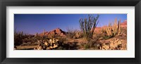 Framed Organ Pipe Cacti, Organ Pipe Cactus National Monument, Arizona, USA