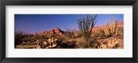 Framed Organ Pipe Cacti, Organ Pipe Cactus National Monument, Arizona, USA