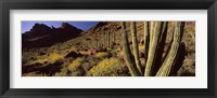 Framed Desert Landscape, Organ Pipe Cactus National Monument, Arizona, USA