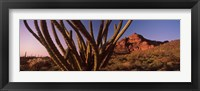 Framed Organ Pipe cactus on a landscape, Organ Pipe Cactus National Monument, Arizona
