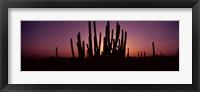 Framed Silhouette of Organ Pipe cacti (Stenocereus thurberi) on a landscape, Organ Pipe Cactus National Monument, Arizona, USA
