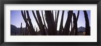Framed Cactus Close-Up, Organ Pipe Cactus National Monument, Arizona, USA