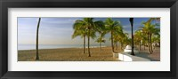Framed Palm trees on the beach, Las Olas Boulevard, Fort Lauderdale, Florida, USA