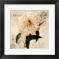 White Peony I Framed Print