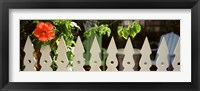 Framed White picket fence and red hibiscus flower along Whitehead Street, Key West, Monroe County, Florida, USA
