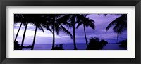 Framed Palm trees on the coast, Colombia (purple horizontal)