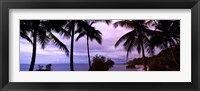 Framed Palm trees on the coast, Colombia (purple sky with clouds)
