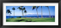 Framed Palm trees at the coast, Ritz Carlton Hotel, Kapalua, Molokai, Maui, Hawaii, USA