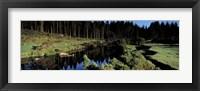 Framed River flowing through a forest, East Dart River, Dartmoor, Devon, England