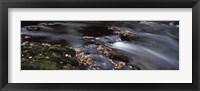 Framed Close-up of Dart River and fallen leaves, Dartmoor, Devon, England