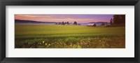 Framed Wildflowers in a field, Finland