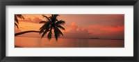 Framed Silhouette of palm tree on the beach at sunrise, Fihalhohi Island, Maldives