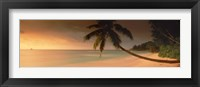Framed Silhouette of a palm tree on the beach at sunset, Anse Severe, La Digue Island, Seychelles