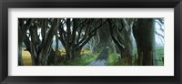 Framed Road at the Dark Hedges, Armoy, County Antrim, Northern Ireland