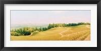 Framed Vineyards in spring, Napa Valley, California
