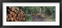 Framed Stacks of logs in forest, Burrator Reservoir, Dartmoor, Devon, England