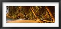 Framed Hammock between two palm trees, Seychelles