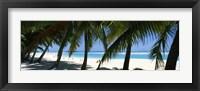 Framed Palm trees on the beach, Aitutaki, Cook Islands