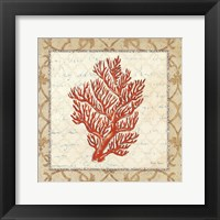 Coral Beauty Light I Framed Print