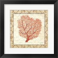 Coral Beauty Light III Framed Print