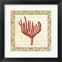 Coral Beauty Light IV Framed Print