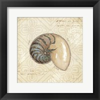 Beach Treasures III Framed Print