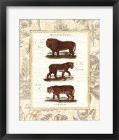 Framed African Animals IV