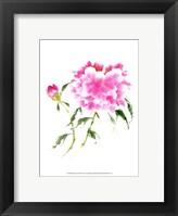 Framed Peonies in Pink II