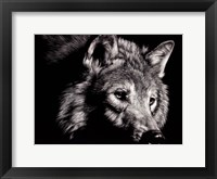 Framed Wild Eyes