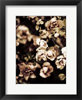 Framed Romantic Roses I