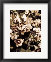 Framed Romantic Roses II