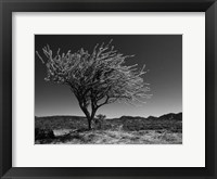Framed Start Spring Tree