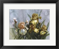 Framed Hadfield Irises I