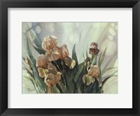 Framed Hadfield Irises II