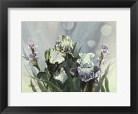 Framed Hadfield Irises III