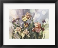 Framed Hadfield Irises V
