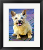 Framed Cairn Terrier